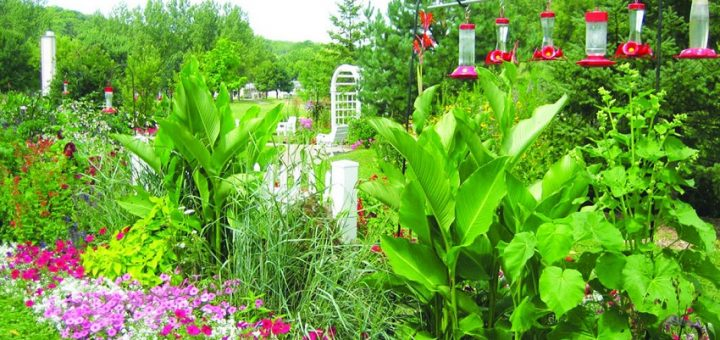 Tips to Make Your Home Garden Hummingbird-Friendly
